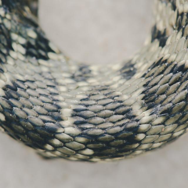 """Close up of snake skin"" stock image"
