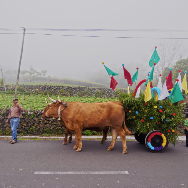 """Cortejo do Espirito Santo, Holy Spirit Festivity Procession, Sao Jorge..."" stock image"