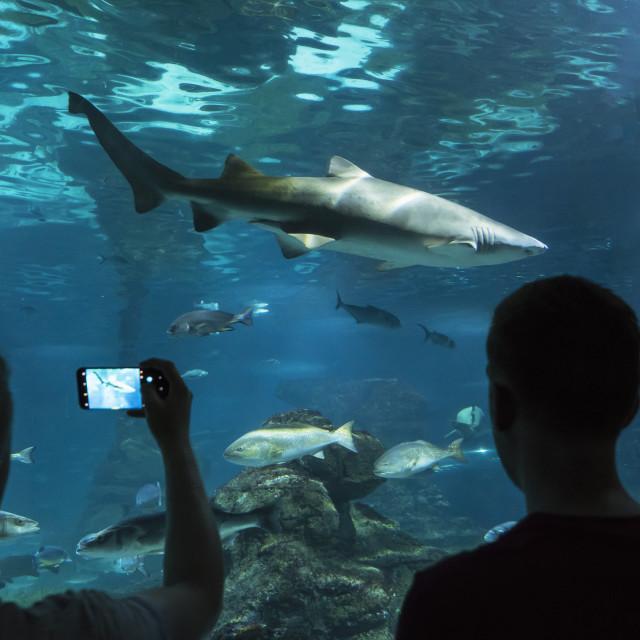 """""""Barcelona. Aquarium."""" stock image"""