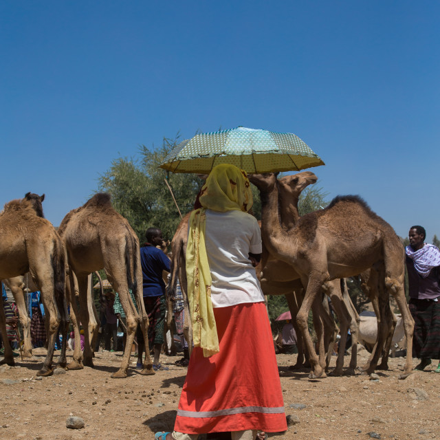 """Woman holding an umbrella in the camel market, Oromo, Sambate, Ethiopia"" stock image"
