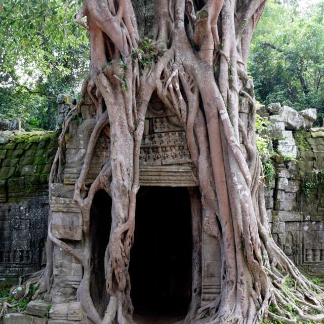 """Ta Som Temple"" stock image"