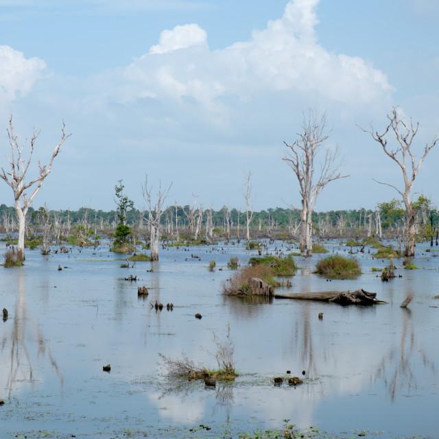 """Lake in Angkor"" stock image"
