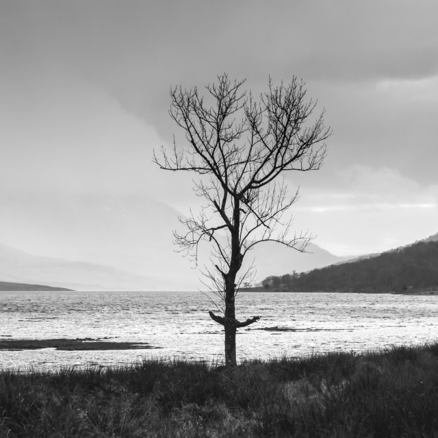 """Etive Tree"" stock image"