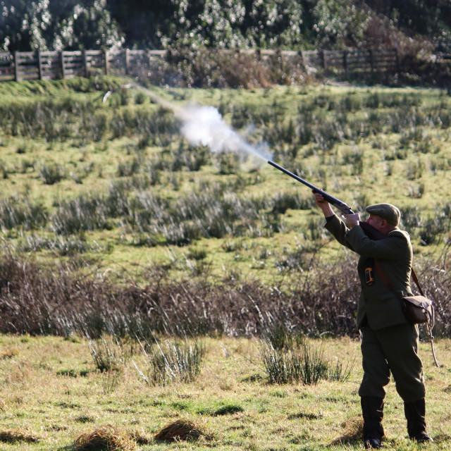 """""""Pheasant Shooting"""" stock image"""