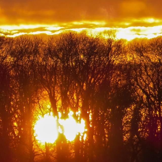 """""""Woodland sunset"""" stock image"""