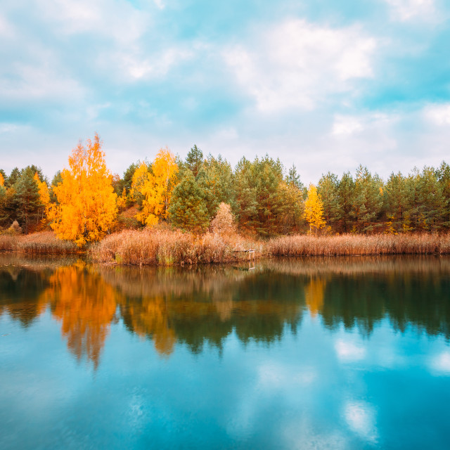 """""""Beautiful Lake Or River And Forest. Autumn Season."""" stock image"""