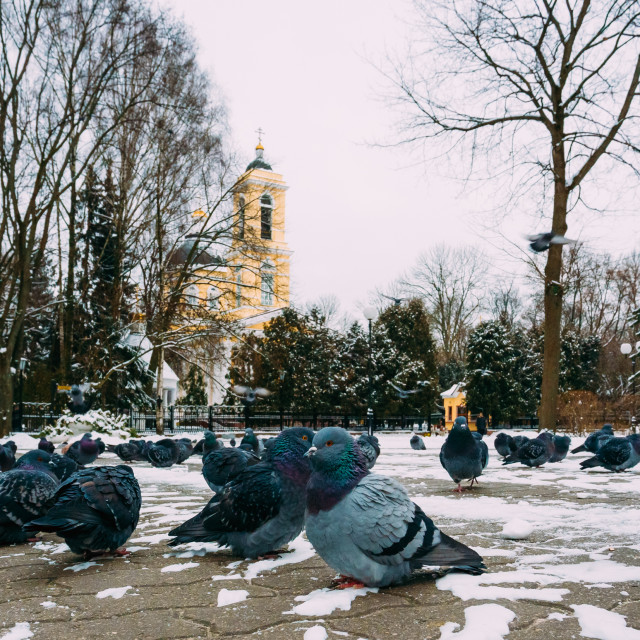 """""""Peter and Paul Cathedral in Gomel, Belarus. Winter season"""" stock image"""