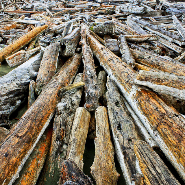 """Driftwood Colour, Vancouver Island B.C."" stock image"