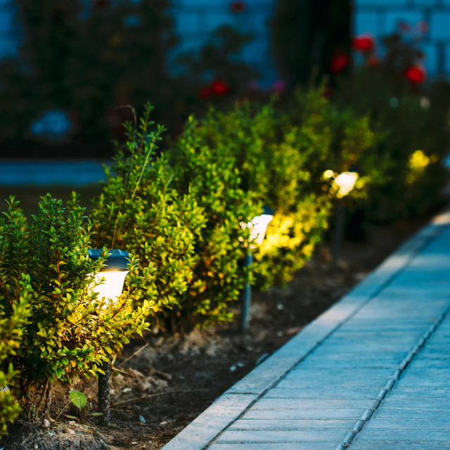 """Night View Of Flowerbed With Flowers Illuminated By Energy-Saving Solar..."" stock image"