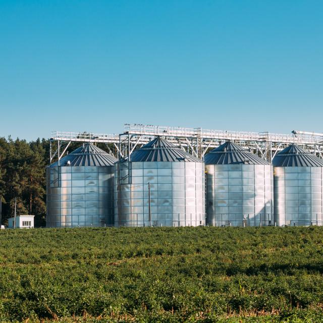 """""""Modern Granary, Grain-drying Complex, Commercial Grain Or Seed Silos In Sunny..."""" stock image"""