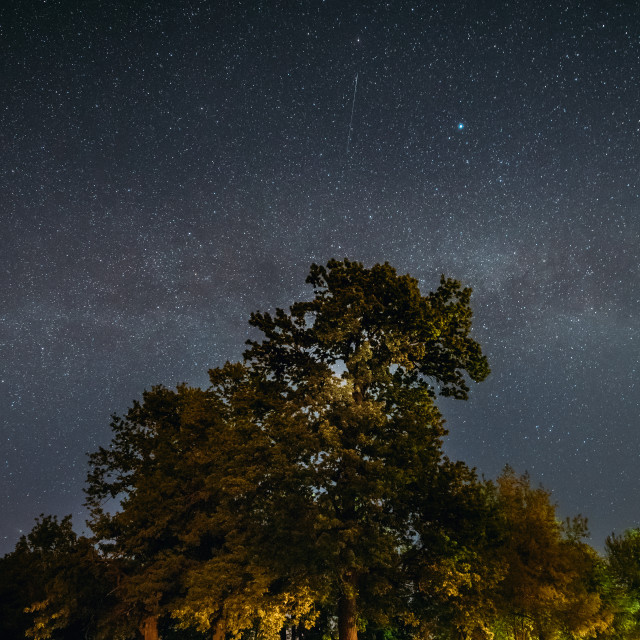 """""""Green Trees Oak Woods In Park Under Night Starry Sky With Milky Way Galaxy...."""" stock image"""