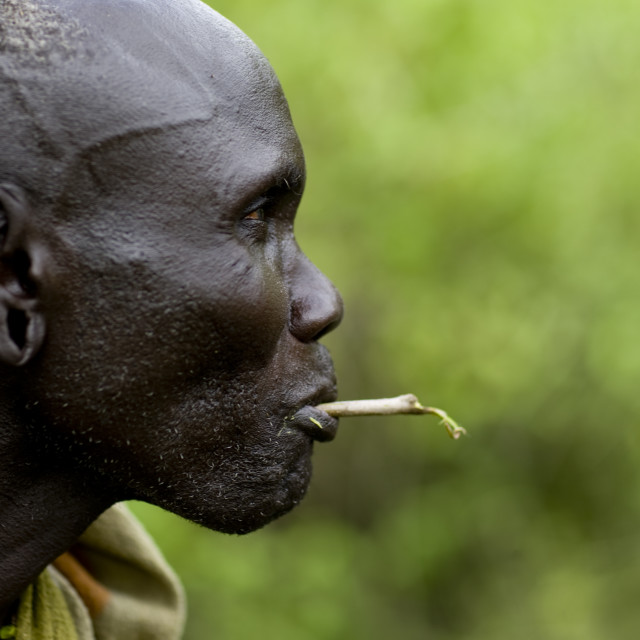 """""""Portrait Of A Mursi Tribe Man Chewing A Gima Stick, Omo Valley, Ethiopia"""" stock image"""