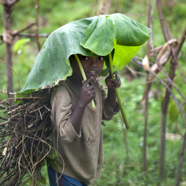 """Young Boy Using A Tree Leaf As An Umbrella, Yali Village, Ethiopia"" stock image"