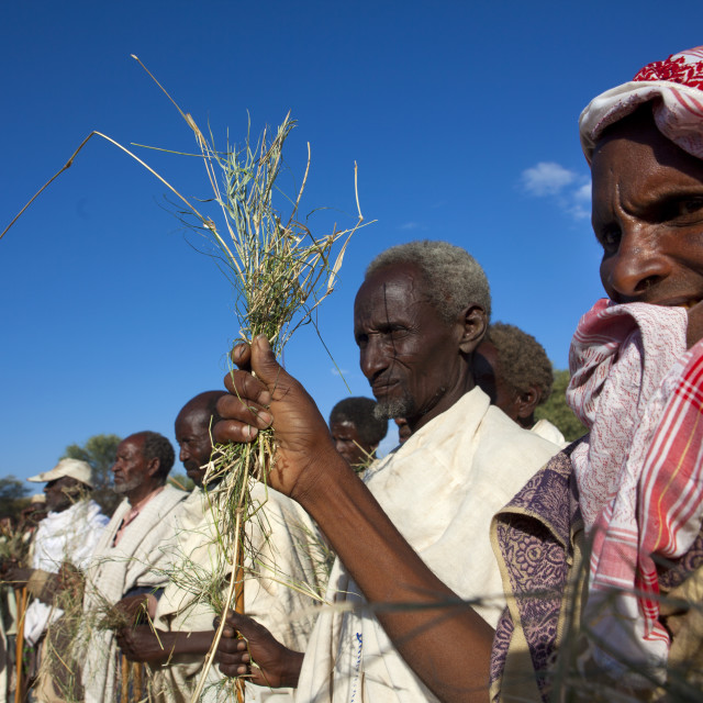 """Group Of Former Karrayyu Tribe Leaders Holding Grass To Be Exchanged With The..."" stock image"