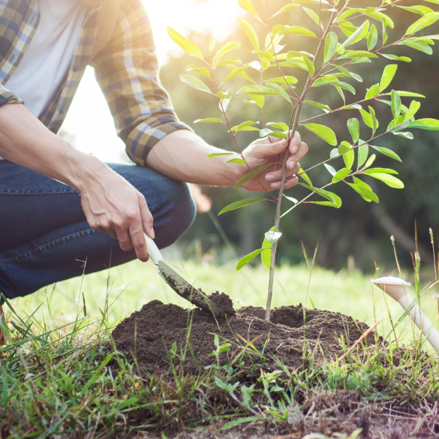 """Young man kneeling during planting a tree, profession concept"" stock image"