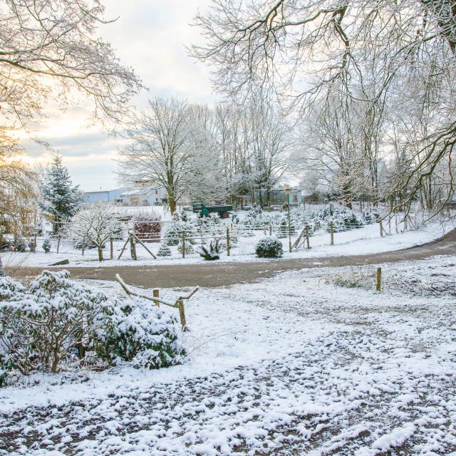 """Winter Morning"" stock image"