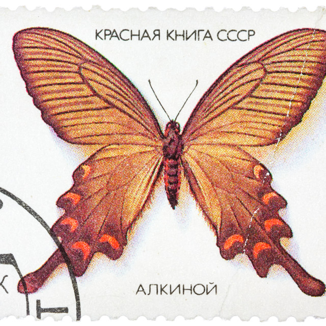 """""""Stamp printed in the USSR shows butterfly Alcinous, series"""" stock image"""