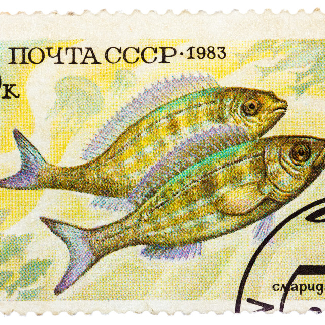 """""""Post stamp printed in USSR (CCCP, soviet union) shows Perciformes..."""" stock image"""
