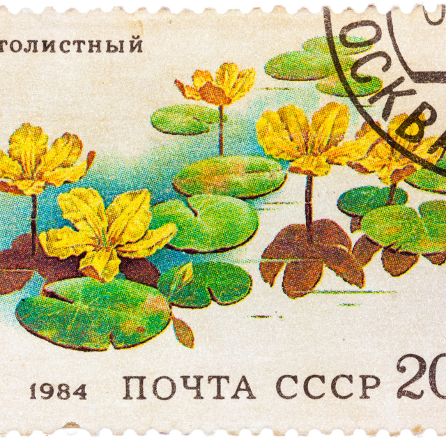 """Stamp from the USSR shows image of Belotsvetnik Schitolistny"" stock image"