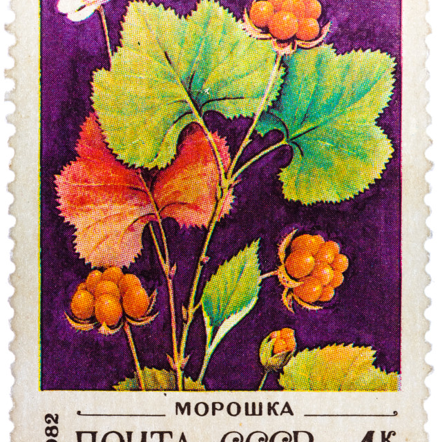 """""""Post stamp printed in USSR (CCCP, soviet union) shows image of blackberries"""" stock image"""