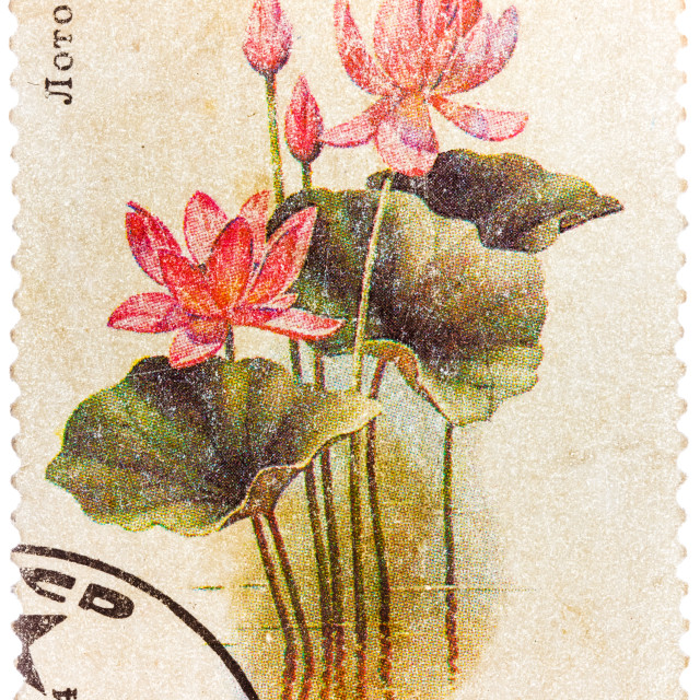 """""""Post stamp printed in USSR (CCCP, soviet union) shows image of lotus from..."""" stock image"""