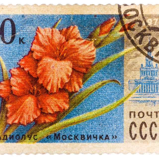 """""""Stamp printed in USSR (CCCP, soviet union) shows image of gladiolus Moscovite..."""" stock image"""