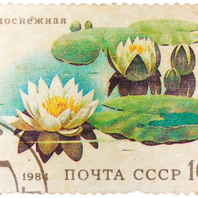 """Stamp from the USSR shows image of water lilies"" stock image"