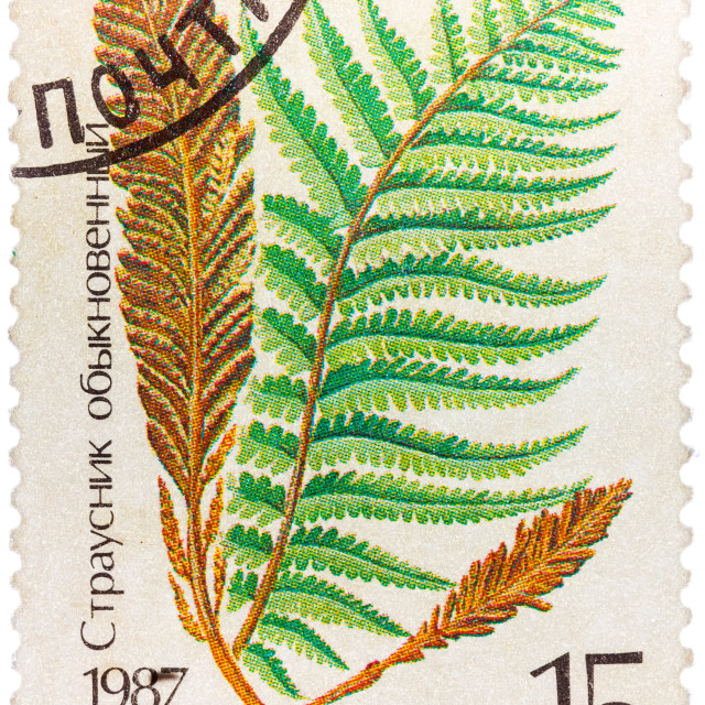 """Stamp printed in the USSR shows Ostrich fern"" stock image"