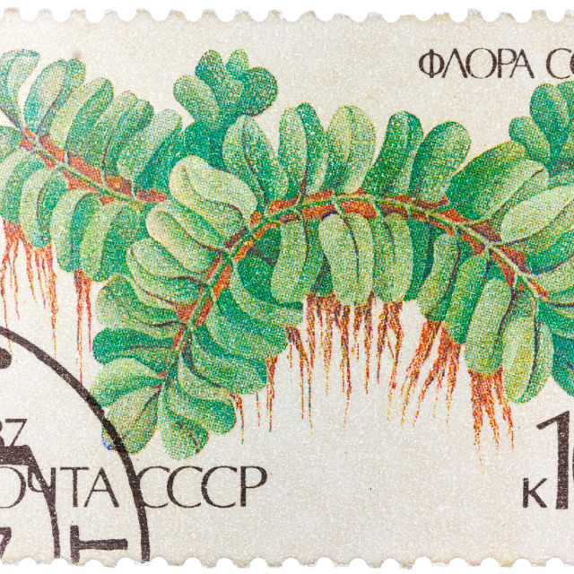 """Stamp printed in the USSR shows Floating Salbiniya"" stock image"