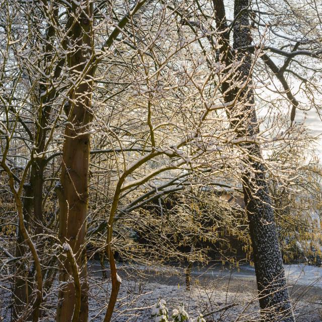 """Winter Morning Sunshine"" stock image"