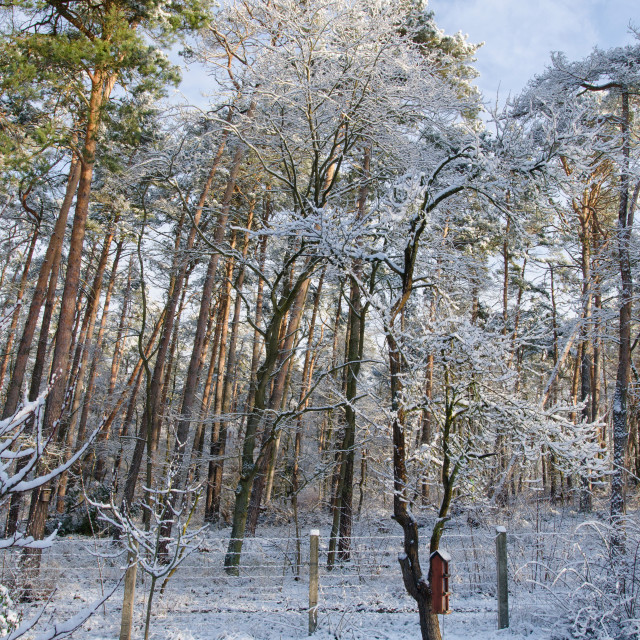 """""""Winter Mood In The Forest"""" stock image"""