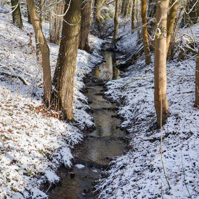 """""""A Stream Flows In The Forest"""" stock image"""