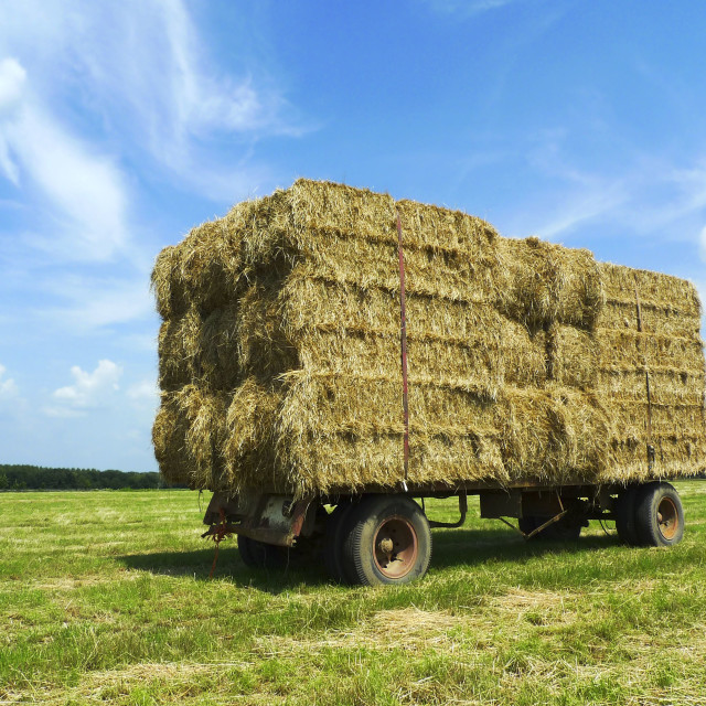 """""""Bales of hay on a trailer 2"""" stock image"""