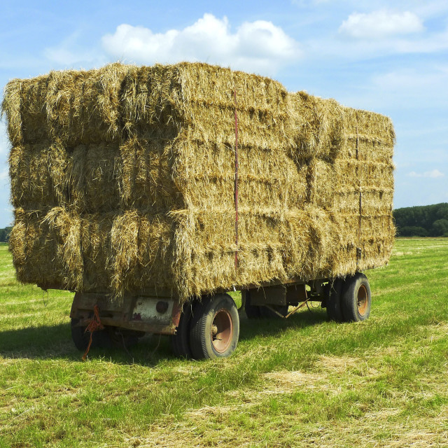 """""""Bales of hay on a trailer 3"""" stock image"""