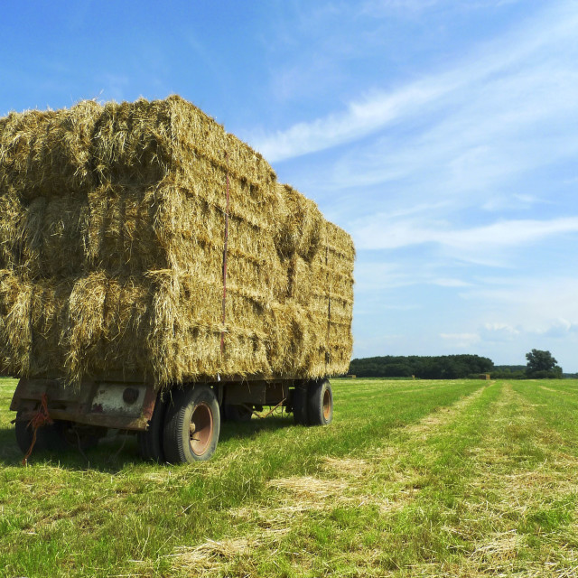 """""""Bales of hay on a trailer 1"""" stock image"""