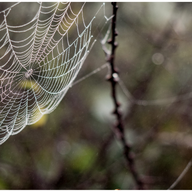 """Spiders web number two"" stock image"