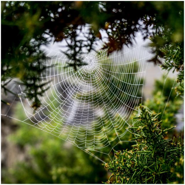 """Spiders web number one"" stock image"