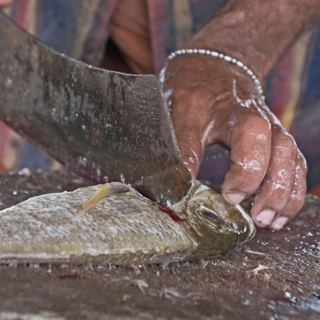 """Cleaning fish"" stock image"