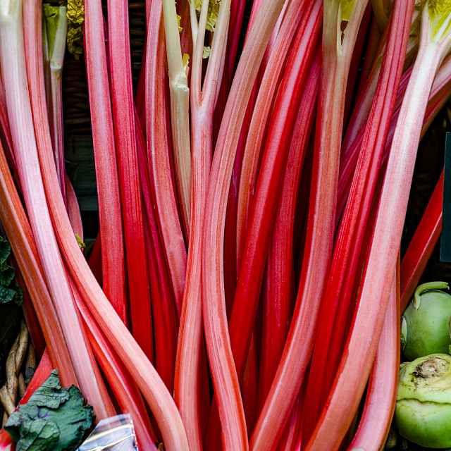 """Red Rhubarb"" stock image"