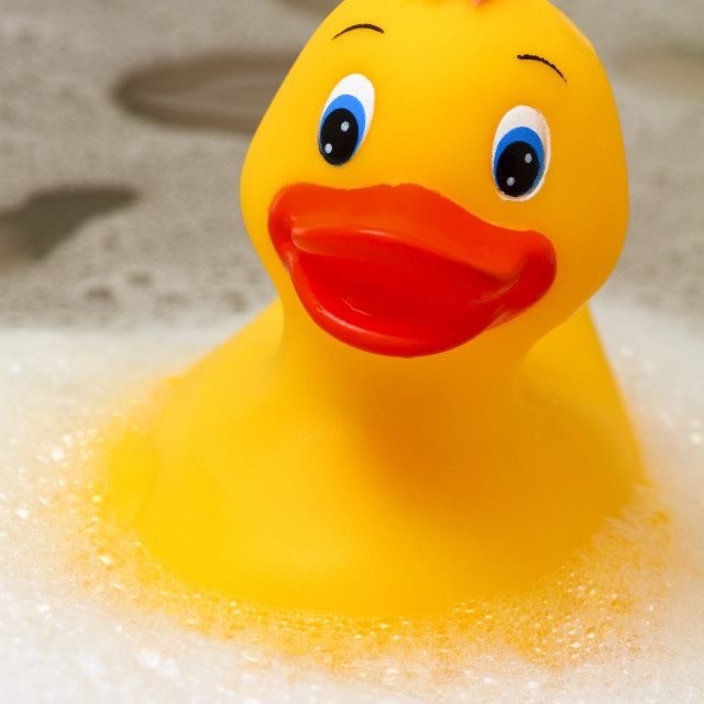 """Toy plastic yellow duck floating in a bath"" stock image"