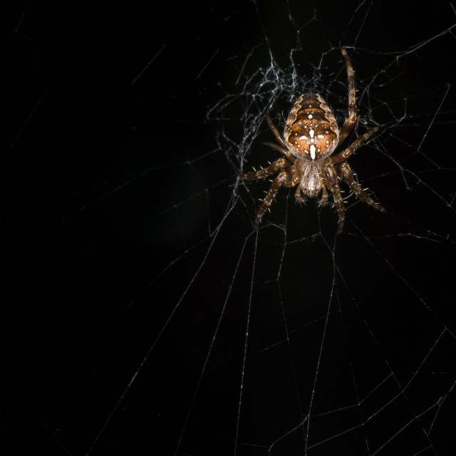 """Low Key Spider"" stock image"