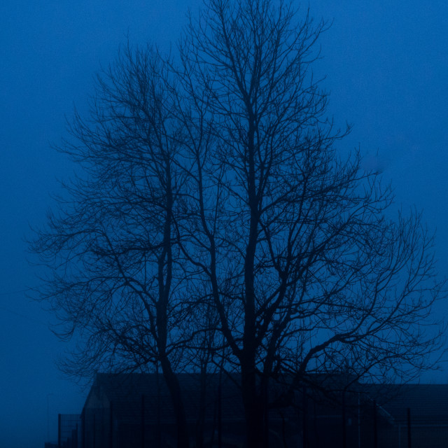 """""""A tree in the mist"""" stock image"""