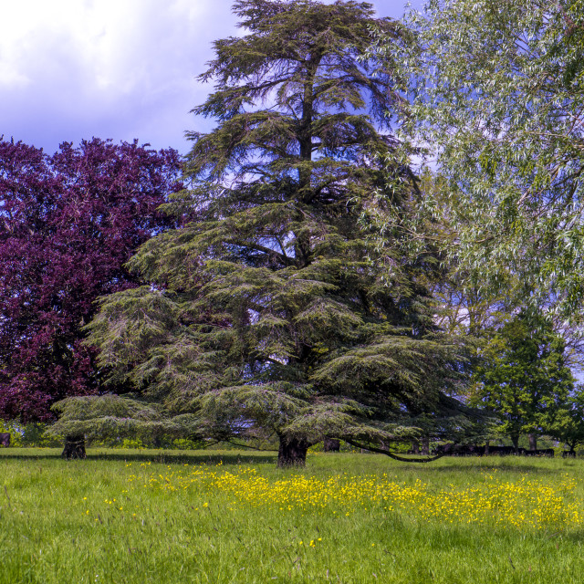 """Two trees in meadow"" stock image"