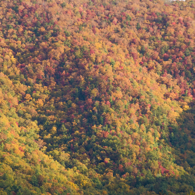 """Hardwood Trees Fall Colors"" stock image"