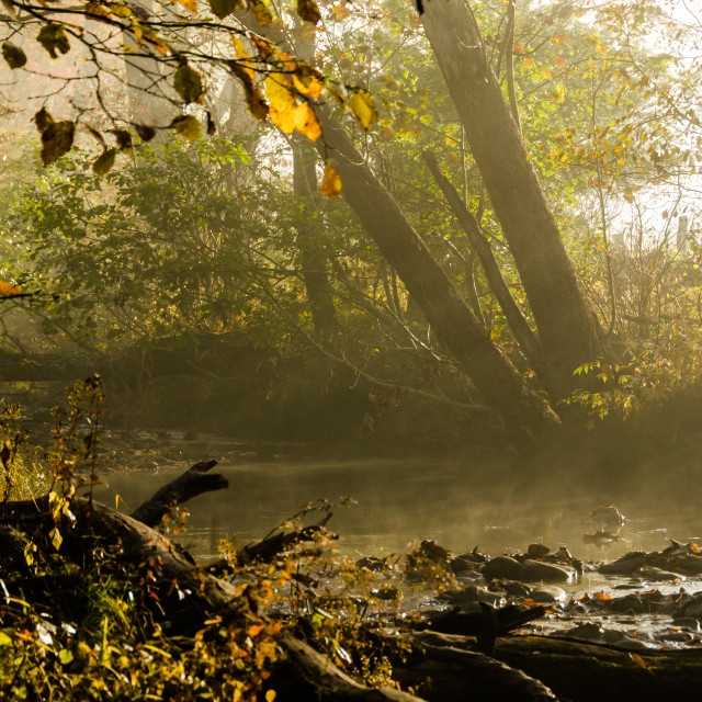 """Stream lit by filtered sunbeams"" stock image"