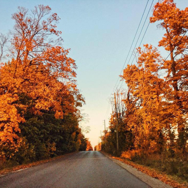 """""""Fall down the road"""" stock image"""