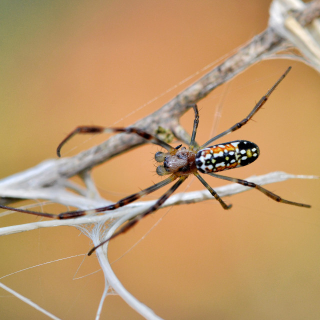 """Colourful spider"" stock image"