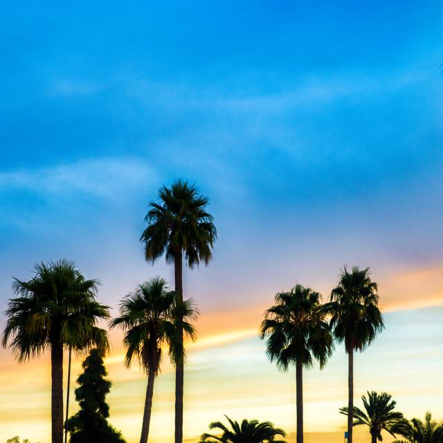 """""""Palm Tree Silhouette"""" stock image"""