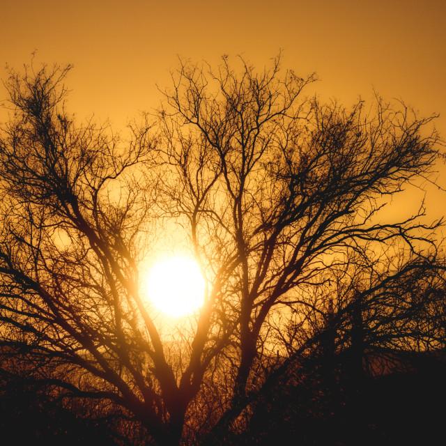 """Sun setting in tree silhouette"" stock image"