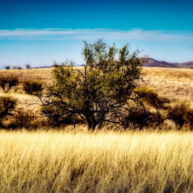 """""""Arizona landscape"""" stock image"""